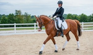 equine-photography-beechwood- equestrian-centre-jumping-dressage-carriage-driving-428